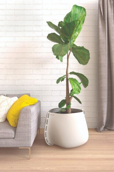 Residential Living Room - Concrete Planter Ideas